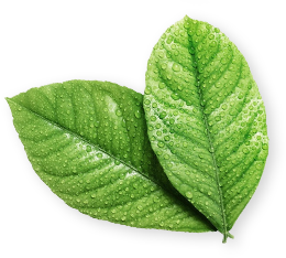 marketing olfativo hojas