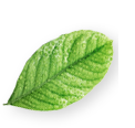 marketing olfativos hojas